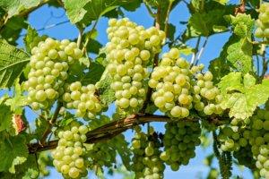 Tudo o que você precisa saber sobre o vinho verde!