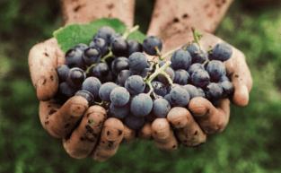 O que são vinhos sustentáveis?